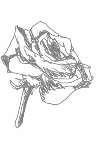 Rosesketch1330936530465