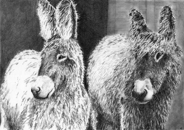 stevekiddart_hairy_donkeys_640